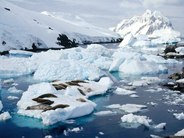 los-mejores-destinos-de-vacaciones-2014-antartida