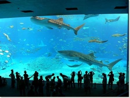 acuario-2