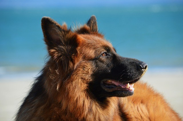 playas-de-cullera-para-perros