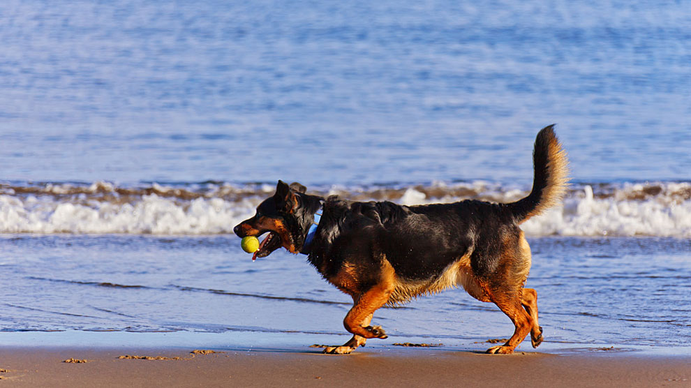 playas-para-perros-en-españa