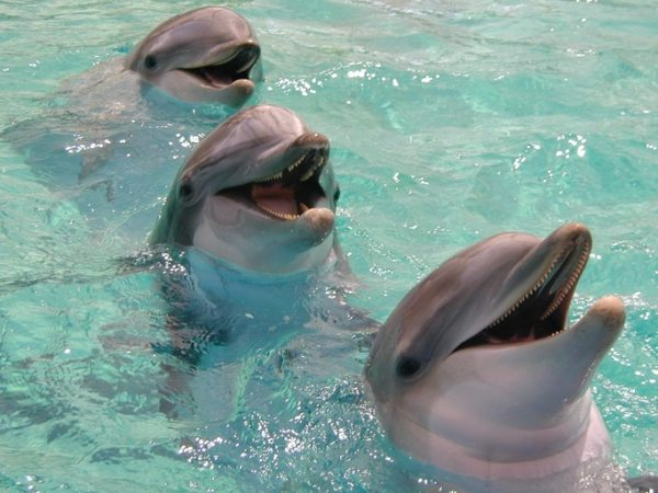 IStock delfines