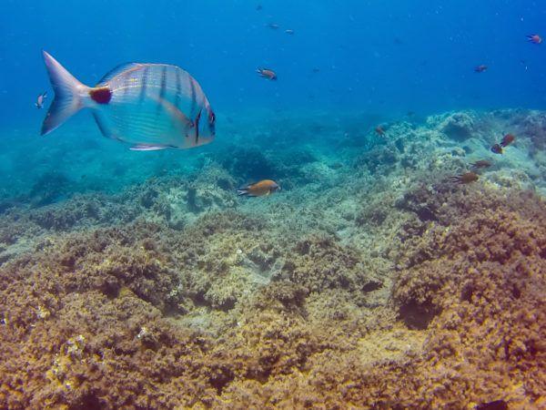 Hacer snorkel lanzarote peces