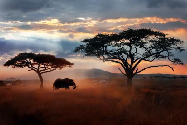 dia-del-padre-ideas-de-viaje-africa-istock