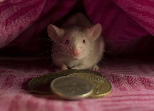 que-hacer-en-madrid-con-ninos-raton-perez-istock