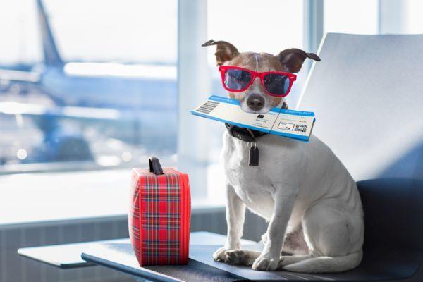 Perro gafas y billete de avion