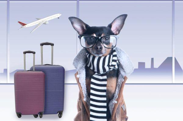 Perro aeropuerto gafas y bufanda