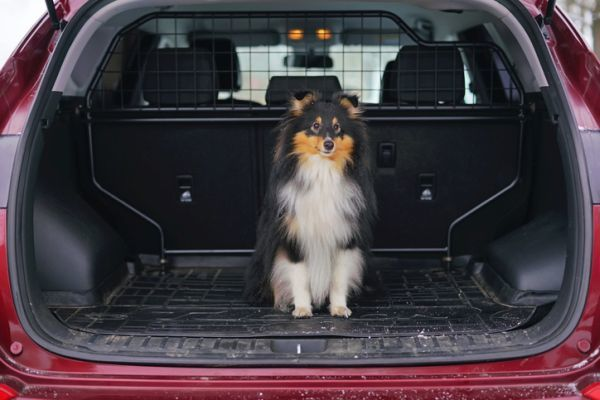 Como viajar con perro en el coche maletero