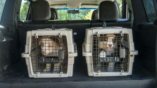 Transportines de perro en el coche