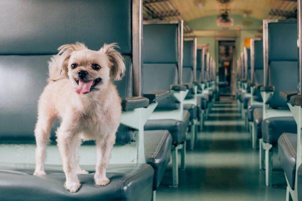 Viajar con perro en renfe en asiento tren vacio