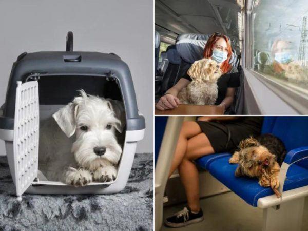 Perros viaje en renfe