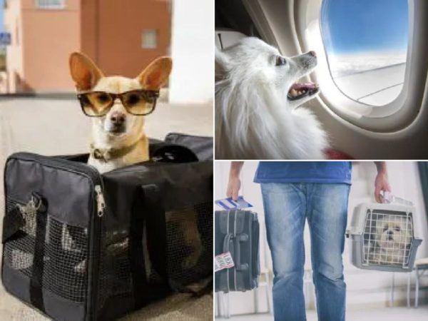 Viajar con perros en avión