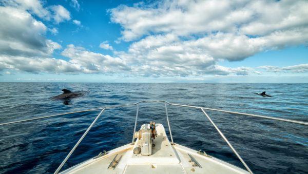 Avistamiento cetaceos canarias