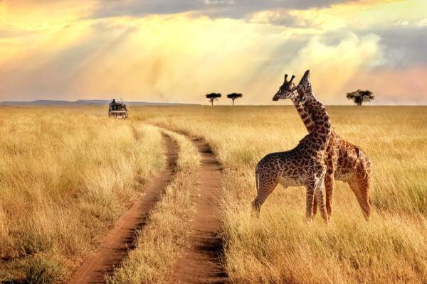 Africa capitales paises serengueti