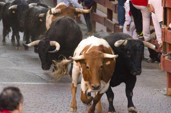 San fermines encierros toros