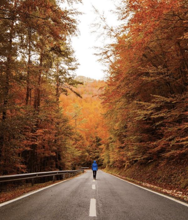 Las mejores rutas de España para disfrutar de la montaña Selva Irati Navarra
