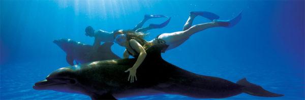 los-peligros-de-nadar-con-delfines-buceo