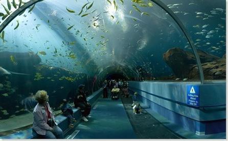 georgia_aquario