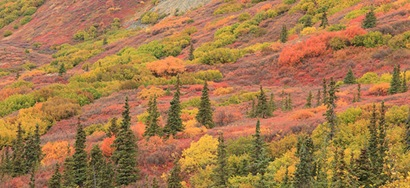 denali parque nacional alaska 03