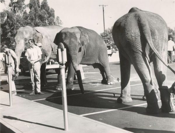 destinos-a-evitar-en-los-estados-unidos-por-sus-locas-leyes-elefantes