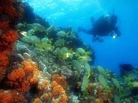 buceo-peces