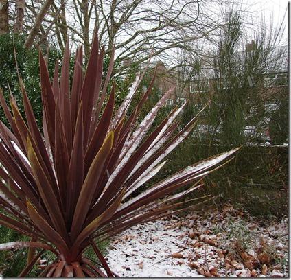 palmera nieve