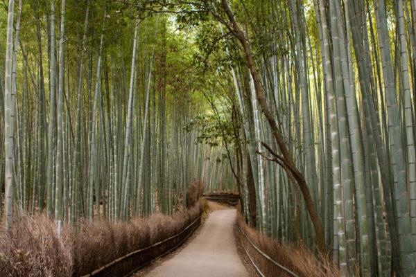 27-lugares-que-habria-que-visitar-antes-de-morir-caminos-bambu-arashiyama-kyoto-japon