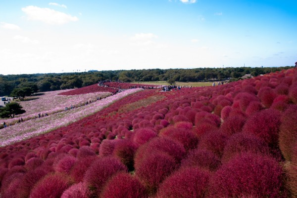 27-lugares-que-habria-que-visitar-antes-de-morir-parque-Hitachi-Hitachinaka-Ibaraki-Japón.