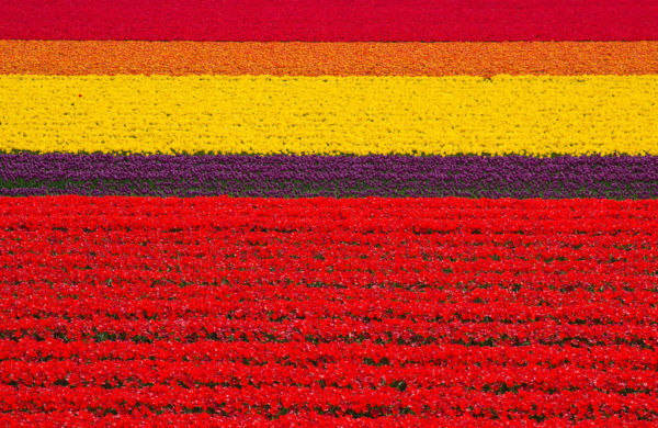 27-lugares-que-habria-que-visitar-antes-de-morir-praderas-tulipanes-holanda