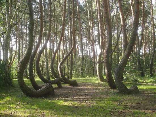 Bosque-encantado-de-Hoia-Baciu