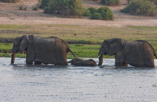 cataratas-victoria-safari