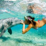 Las-mejores-fotos-de-bora-bora-delfin