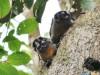 Expedición por el Amazonas: Fauna amazónica