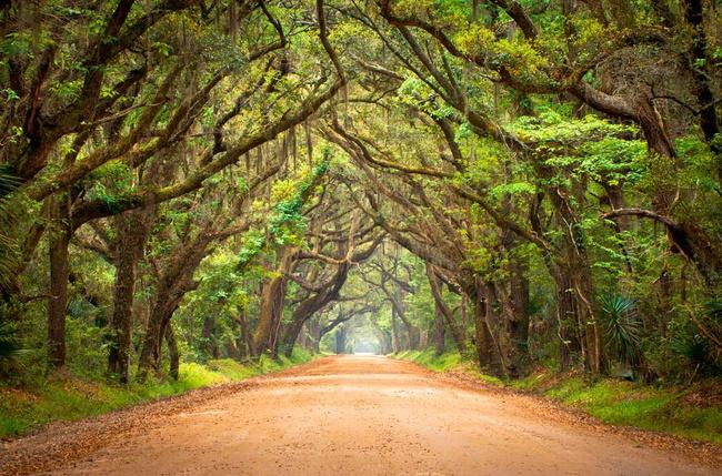los-15-tuneles-arbol-mas-bonitos-del-mundo-botany-bay-estados-unidos