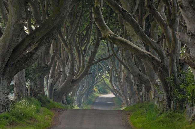 los-15-tuneles-arbol-mas-bonitos-del-mundo-dark-hedges-irlanda