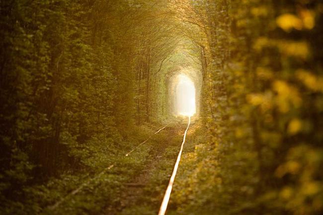 los-15-tuneles-arbol-mas-bonitos-del-mundo