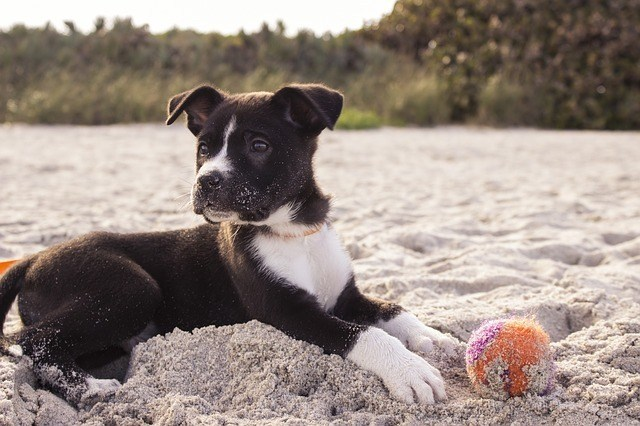 playas-de-perros-ibiza