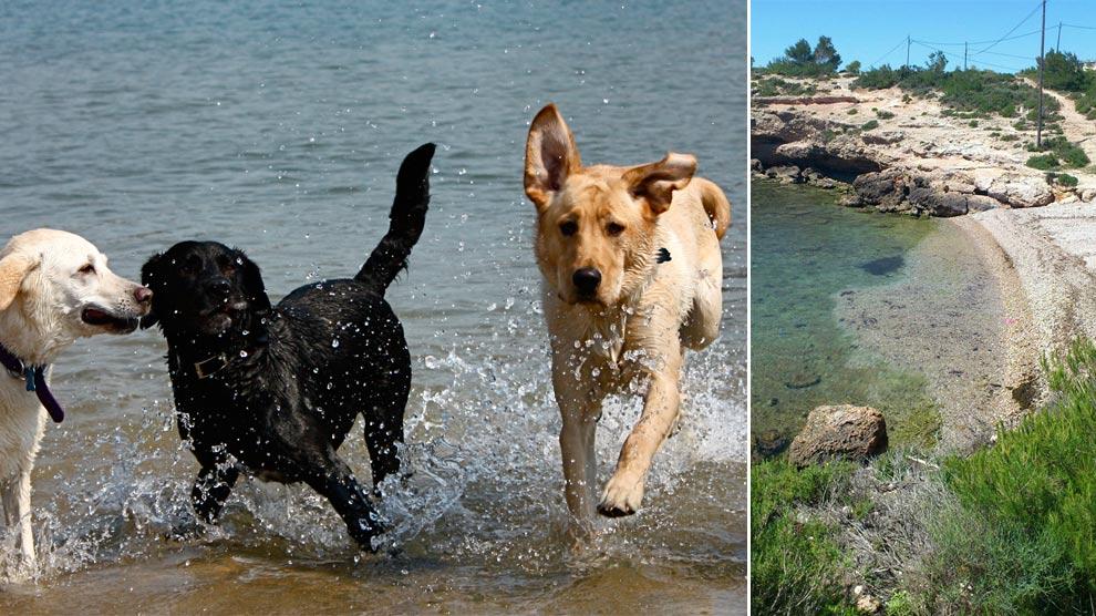 playas-españolas-perros