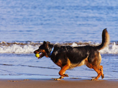 Las 10 mejores playas a las que puedes ir con perros 2017
