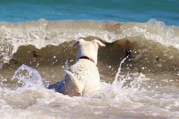 playas-para-perros-en-santander