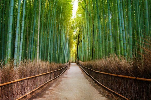 la-sierra-del-montsec-senderos-romanicos-bambu