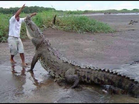16-razones-por-las-que-no-ir-viajar-a-australia-cocodrilos