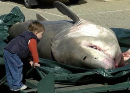 16-razones-por-las-que-no-ir-viajar-a-australia-tiburones