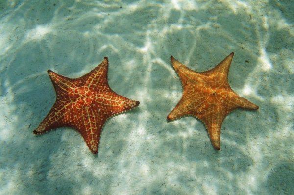 islas-de-san-blas-estrellas