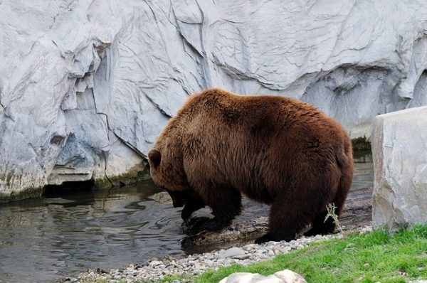 fauna-que-ver-en-kamchatka