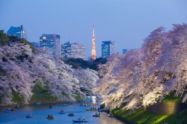 Viaje japon sakura