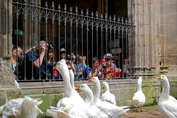 historia-catedral-barcelona-gansos