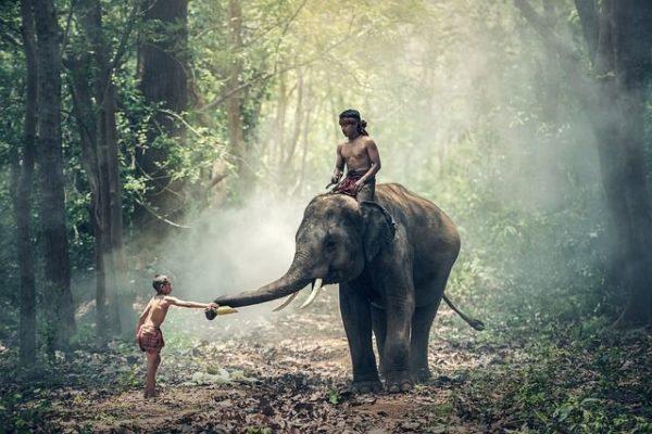 vacunas-que-necesitas-para-viajar-a-tailandia-elefante